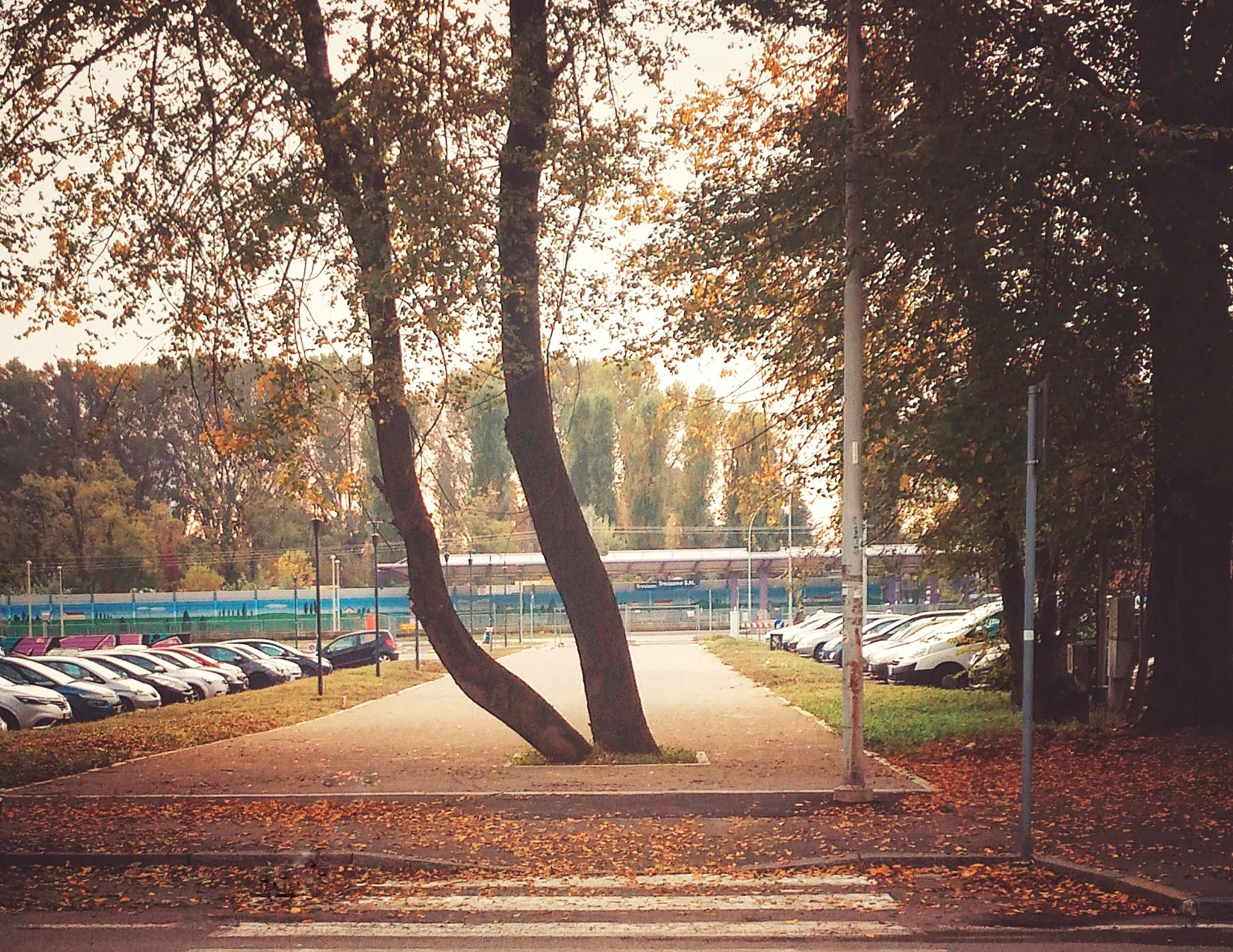 FG SA studio di architettura Fabrizio Guccione Architetto Trezzano sul Naviglio parco percorso in calcestre parco lineare boulevard milano